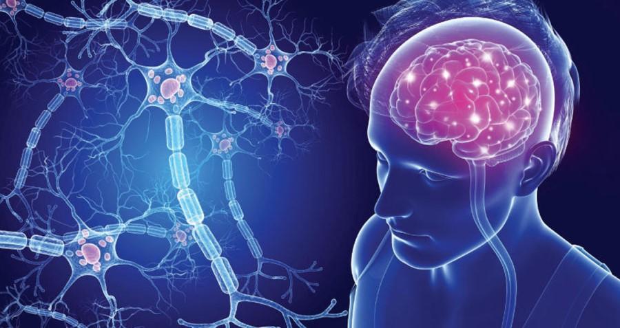 Otoimmün Hastalık Multipl Skleroz (Ms)