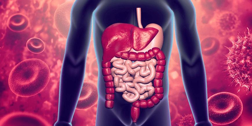 Otoimmün Hastalık Inflamatuvar Bağırsak Hastalığı (Ibh)