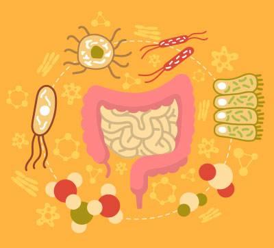 H.pylori'Ye-Karşı-Bağışıklığı-Artırın