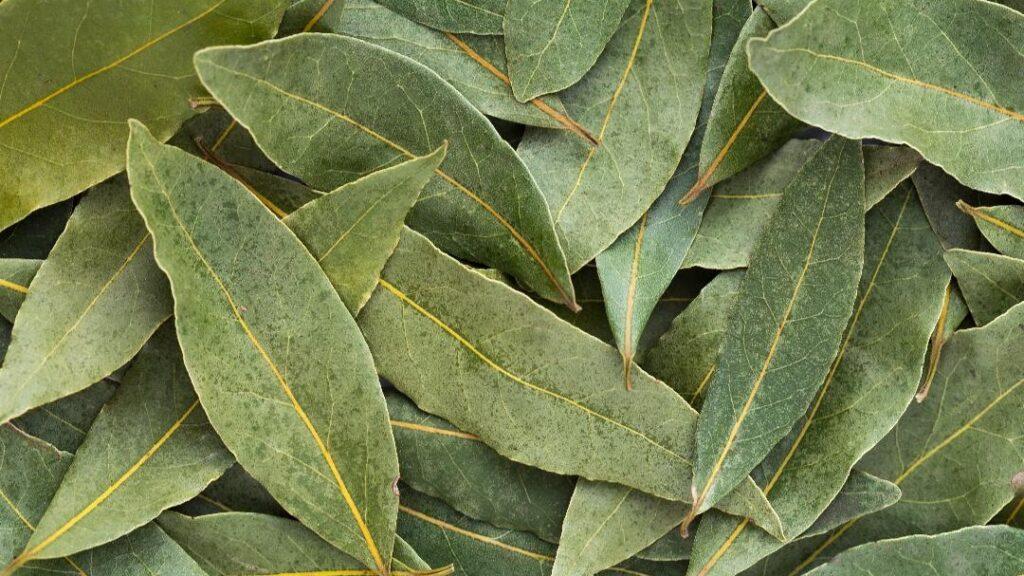 101 Çeşit Şifalı Bitki Ve Baharat Defne Yaprağı