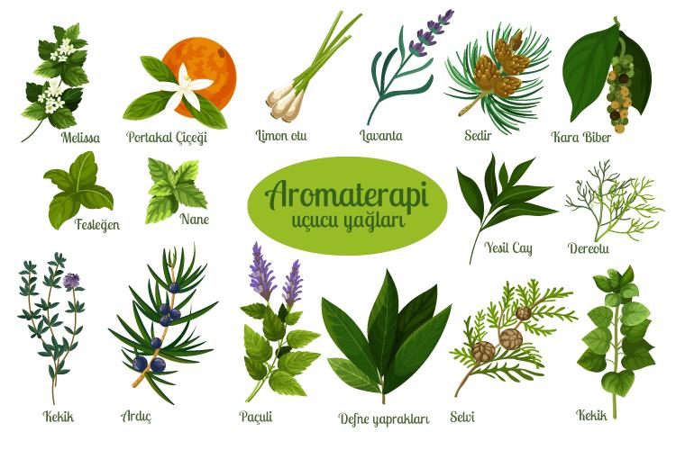 Aromaterapi Yağları (Uçucu Yağlar) Nelerdir