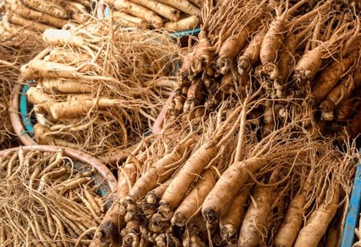 101 Çeşit Şifalı Bitki ve Baharat Ginseng (Panax)