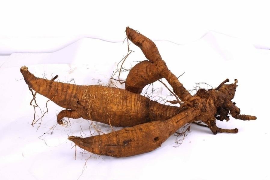 101 Çeşit Şifalı Bitki Ve Baharat Kudzu Kökü (Pueraria)