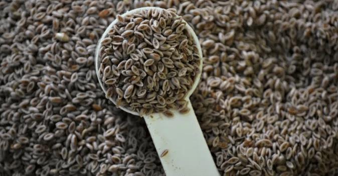 101 Çeşit Şifalı Bitki Ve Baharat Psyllium Kabuğu (İspaghula)