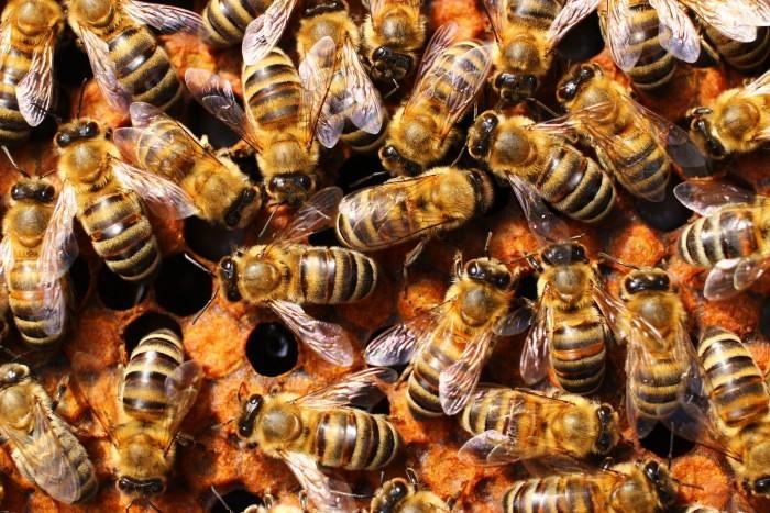 Arı Sütü Nedir? Arı Sütü Faydaları Nelerdir?