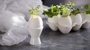 Yumurta Kabuklarının Şaşırtıcı Kullanım Alanları
