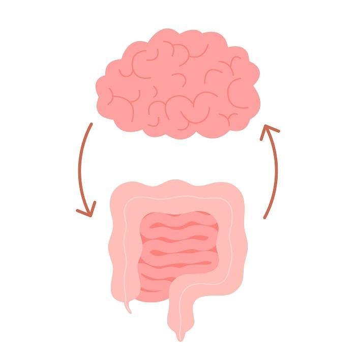 Bağırsak Beyin Bağlantısı Nasıl Desteklenir?
