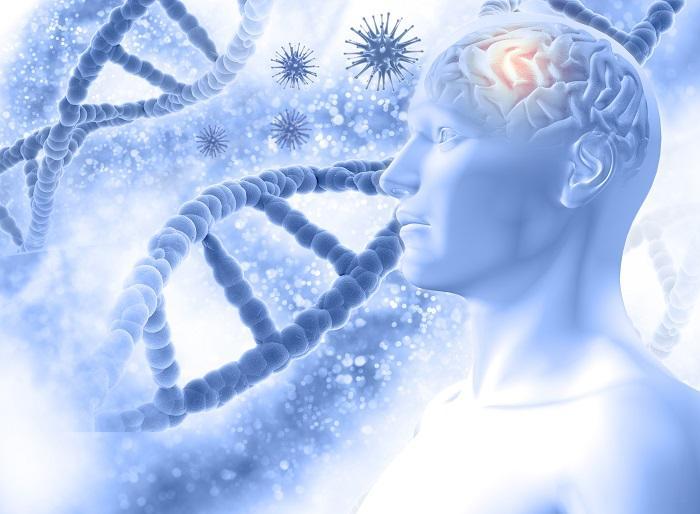 Uzun Yaşamanın Sırrı! Beyin Aktiviteleri Azaltılarak Ömür Uzatılabilir Mi?