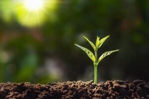 Humuslu Toprak Nedir? Nasıl Yapılır?