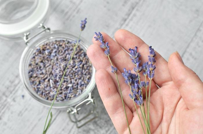 Lavanta Nedir? Lavanta Çayı Ve Özlerinin Faydaları Ve Kullanımları