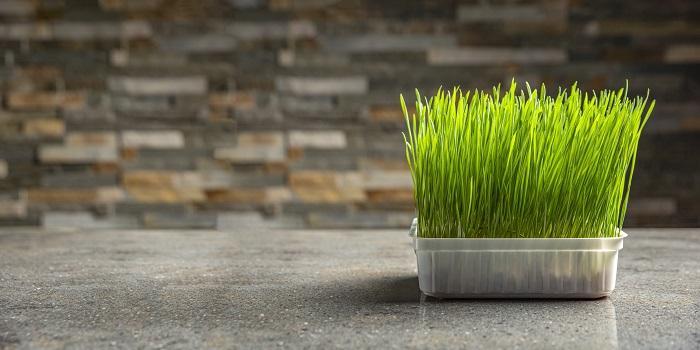 Buğday Çiminin Faydaları: Kullanmak İçin 11 Neden