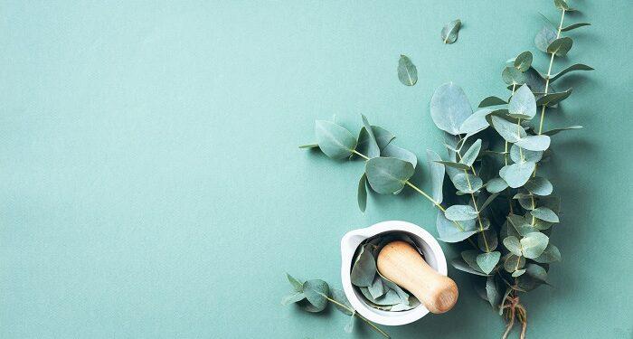 Okaliptüs Yaprağının 7 Etkileyici Faydası